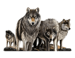 Untamed Wolf Pack Slot - Play the Free Casino Game Online