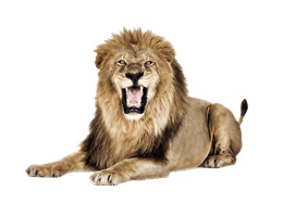50 lions online slot free play
